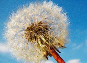 10 consejos para evitar la alergia primaveral