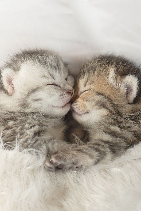 Cute Kittens Are Sleeping And Hugging 7 Other Cute Animals Pictures Cute Kittens Animals Cuteanimals Photoso Kittens Cutest Sleeping Kitten Baby Kittens