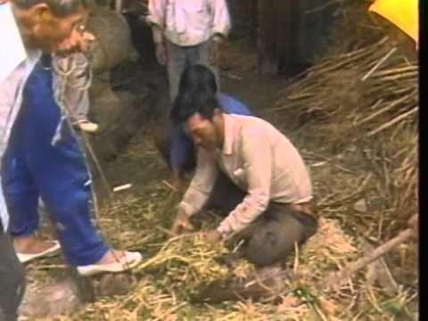 1970년대의 농촌생활