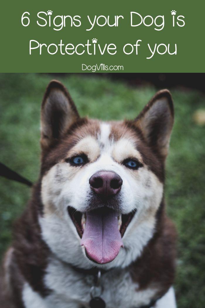 Protective Behavior In Dogs Protection Vs Aggression Dog