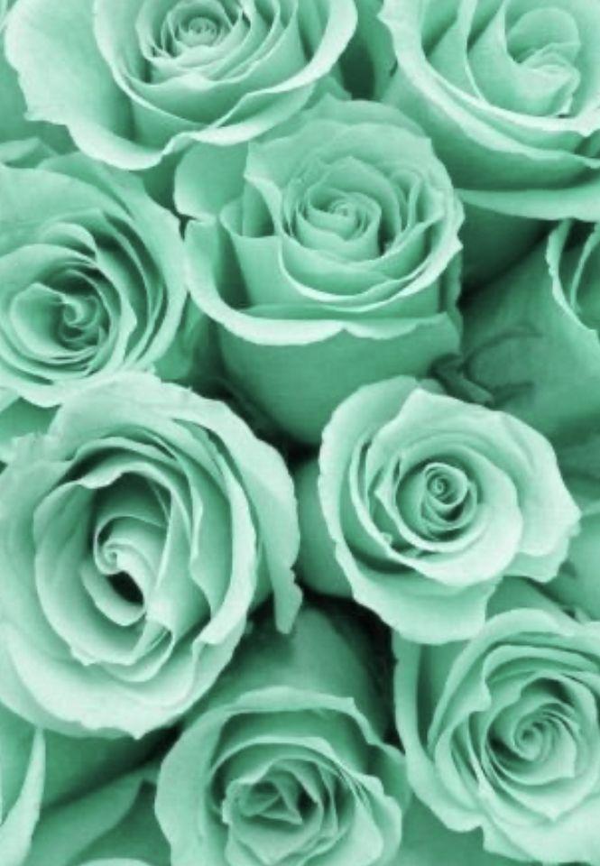 Epingle Par Gillian Sur Photographie Pastel En 2020 Fond D Ecran Vert Fond D Ecran Iphone Pastel Fond D Ecran Iphone Fleur