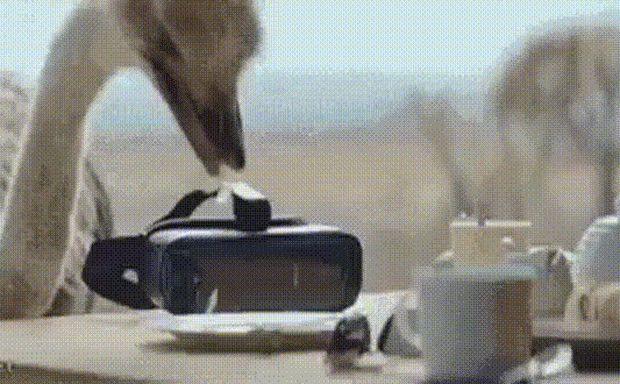 Страус и виртуальная реальность / АйДаПрикол :)