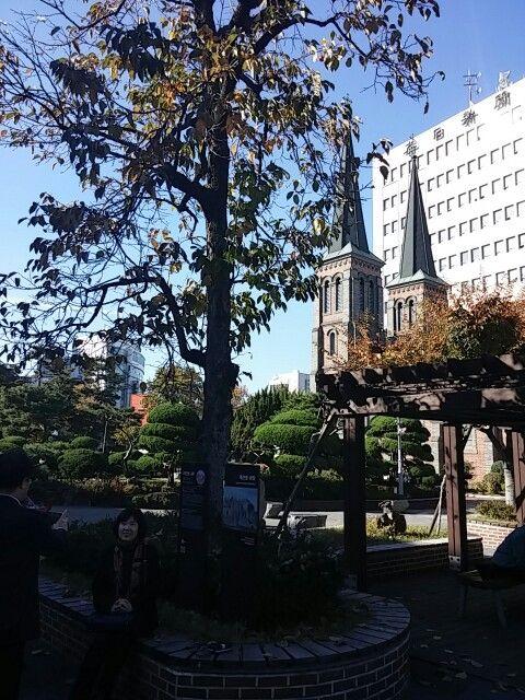 계산 성당 앞 이인성 감나무