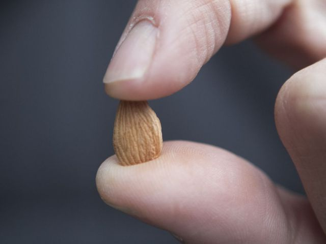 Superseed? Apricot kernels touted as cancer cure linked to cyanide poisoning