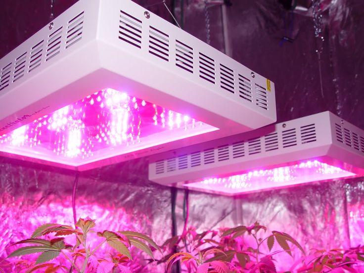 Nieuwe duurdere modellen ledlampen kunnen HPS kweeklampen tegenwoordig vervangen en zelfs verslaan, maar je zult dan wel wat meer moeten investeren. LED lampen leveren vaak kwalitatief betere wiet op met meer geur en trichomen en hardere toppen. Fluorescente lampen zijn een goede keus voor in een lage kweekruimte zoals een kast, ze kosten niet veel en maken een onopvallende kweekruimte.