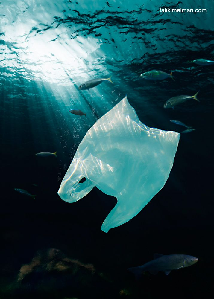 Marine Pollution is 60 to 80% plastic. Say no to plastic bags! Pledge to stop using plastic bags http://www.seathos.org/projects/bag-ban/
