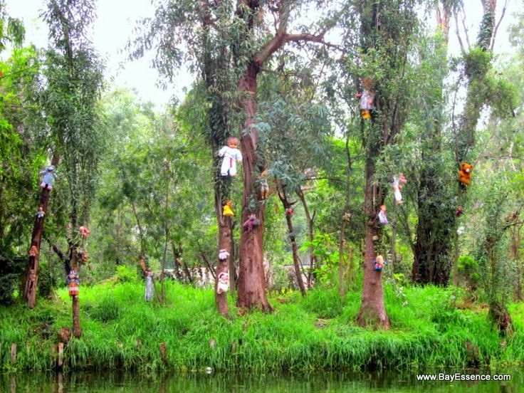 Xochimilco's Floating Gardens | Something weird and creepy about Xochimilco is that at one point you see a chinampa with old dolls tied to the trees. The former owner of this area found a dead body of a girl and used the dolls to ward off evil spirits believing the dolls were forgotten yet alive and would mysteriously kill animals at night in Xochimilco. The owner was eventually driven mad and committed suicide, but the dolls still remain. | www.BayEssence.com