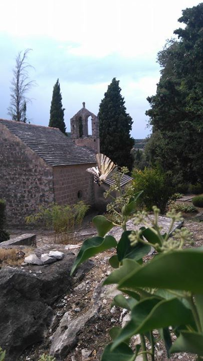 A butterfly and a medieval church in Škrip on the island of Brač off Croatia's Dalmatian Coast. According to tradition, the charming village is the birthplace of Helena, mother of the Roman emperor Constantine (the Great). We visit it on our brand-new cruise in Southern Dalmatia.  http://www.petersommer.com/croatia/tours/