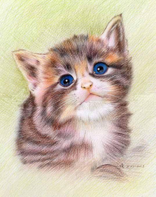 Custom Pet Portraits - Original Color Pencil Art - Lovely Kitten