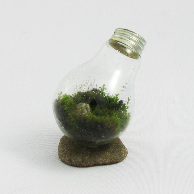 Opis MossBulb - Zielona Wrona  Mała żarówka pełna życia - wypełniona rosnącym mchem. Zaproś do swojego domu odrobinę lasu. Mały ogród w żarówce, idealnie sprawdzi się jako ozdoba na biurko czy stolik. Wypełni zielenią każde wnętrze, podkreślając jego piękno i niepowtarzalność....