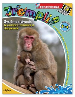 Tremplin