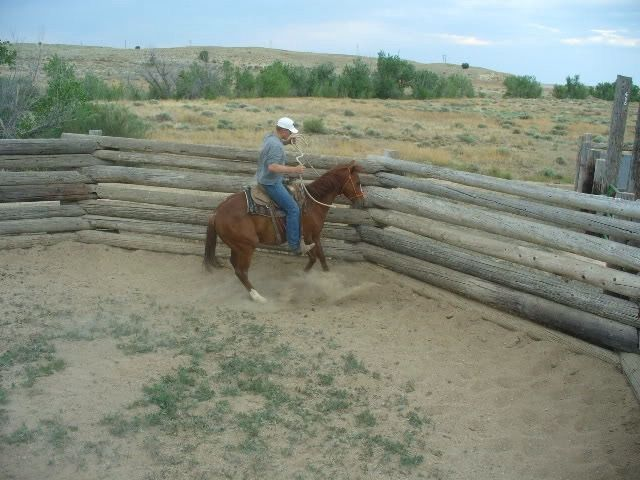 1000 Images About Horse Round Pens On Pinterest Indoor