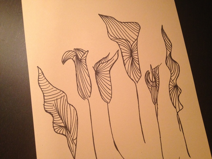 Late night zentangle.. Calla inspiration