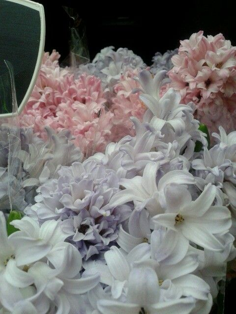 Pastels of hyacinths