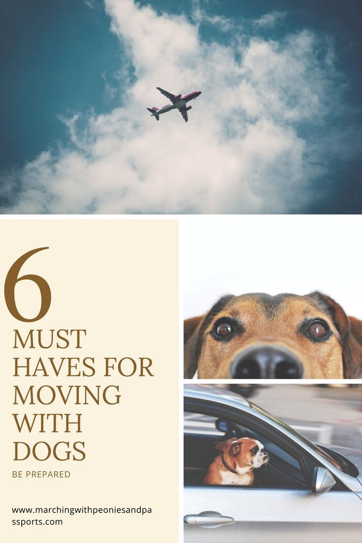 Pcsing With Dogs Moving Overseas Flying With Pets Moving With