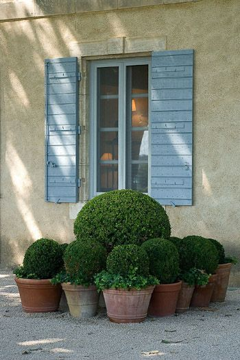 clustered boxwood topiary, Provencale yellow stucco & blue shutters - Designer Dominique La fourcade, one of Provence's best-known Country Garden Designers -- Clive Nichols garden photography