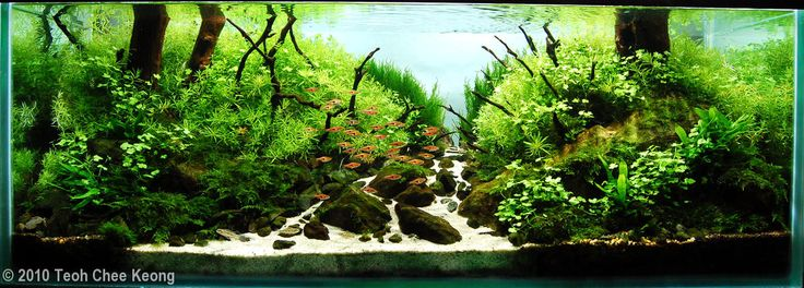 Teoh Chee Keong, 2010 AGA Aquascaping Contest
