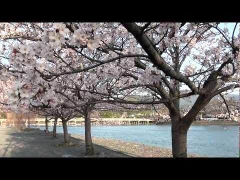 Cerejeiras em flor em Quioto,  Japão. 時空の栞 - 京都春桜紀行 - YouTube.