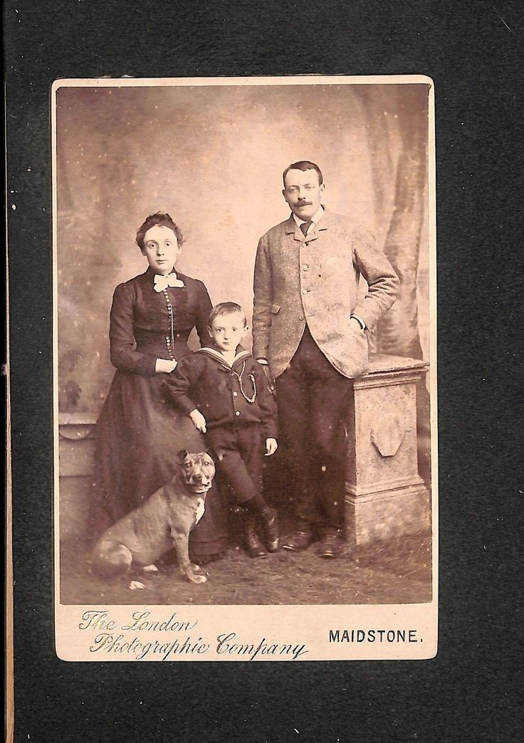 OLD CABINET PHOTO CDV Maidstone Photo Family With Dog Staffy Bull Terrier