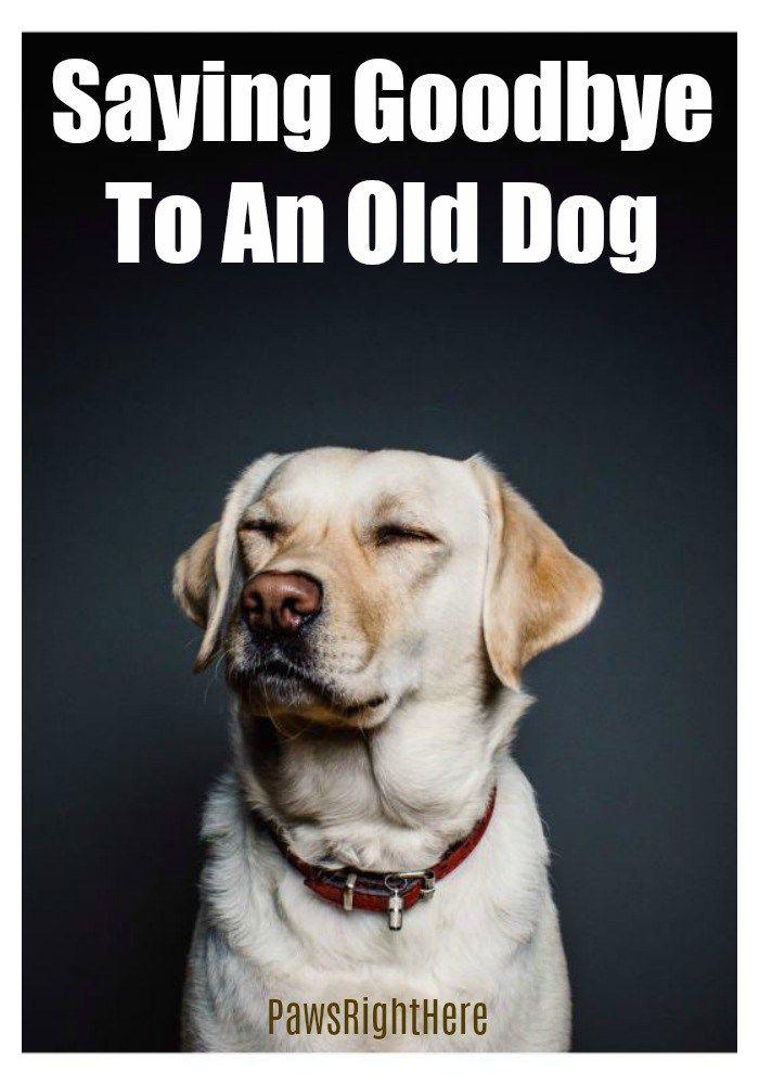 Saying Goodbye To Your Old Dog Dog Training Positive Dog