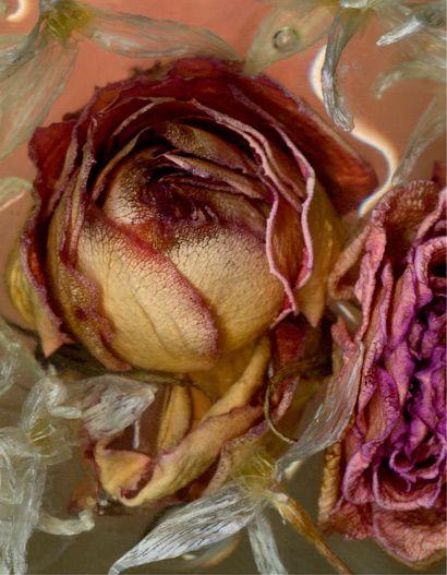 Roberta Bailey - scanography - scannography - ScanArt - Scanner Art