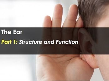The Ear - Structure and Function