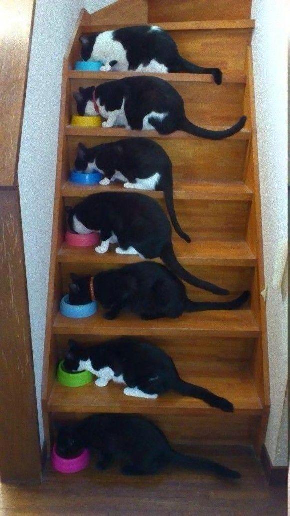 25 beste idee n over katten op pinterest katje katten katje en kittens - Om een e b e bbinnenkap te creeren ...