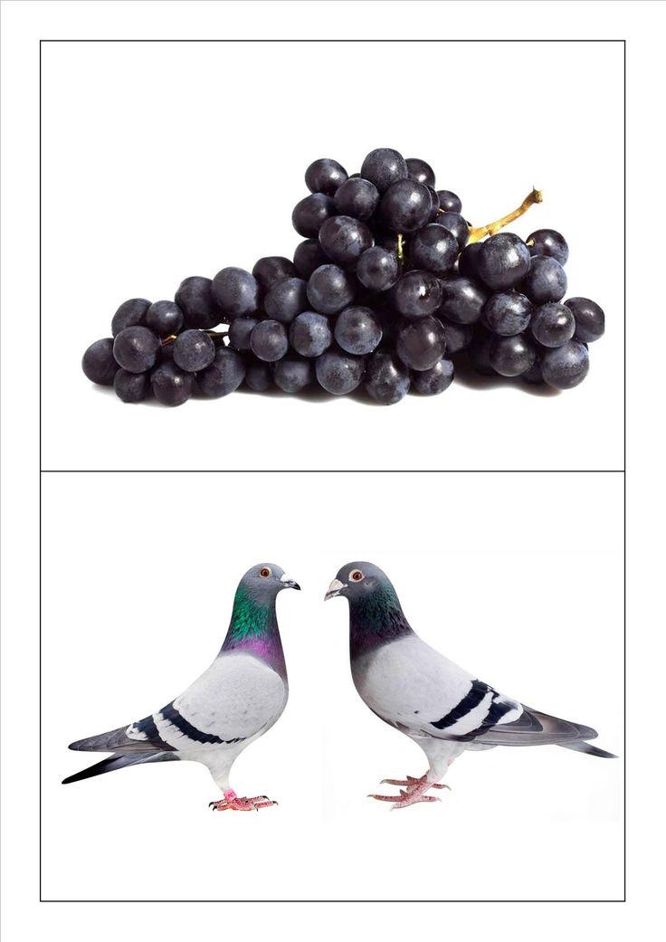 Kringspel rijmen: Druiven - duiven