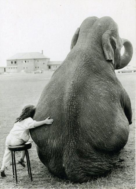 Because even an elephant needs a hug once in a while. :D