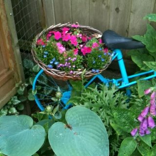 Basket of impatience and lobelia. This will be beautiful when it fills in.