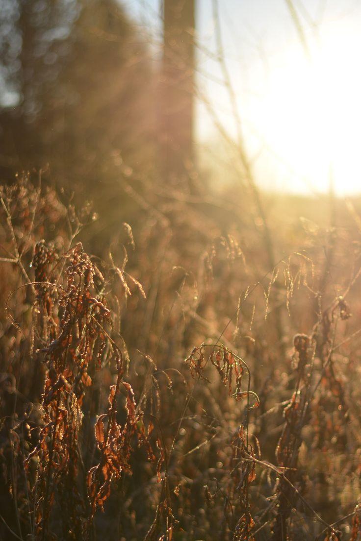 Frostig soluppgång @HojnaSandra - Odling – Pyssel – Lantliv – Trädgård – DIY