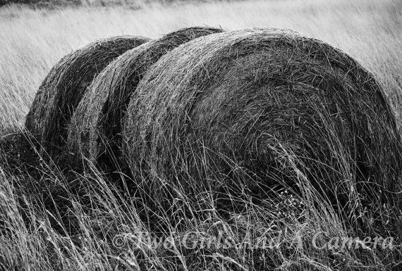 Hay Bales: Photograph available in color or black & white