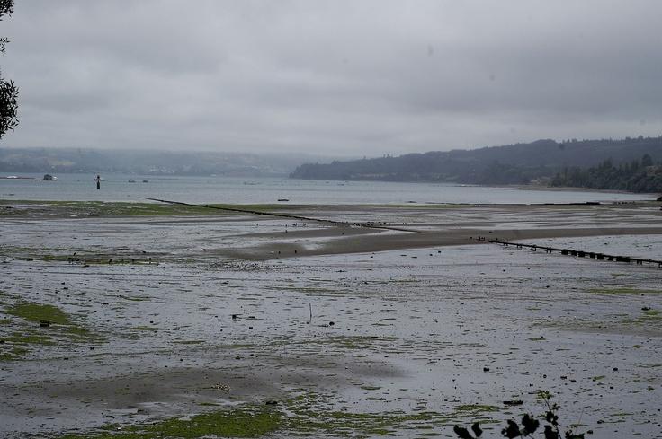 Marea baja en Curaco de Vélez, Chiloé.