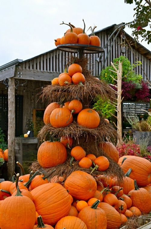 17 best images about fall decorating ideas on pinterest Fall outdoor decorating with pumpkins