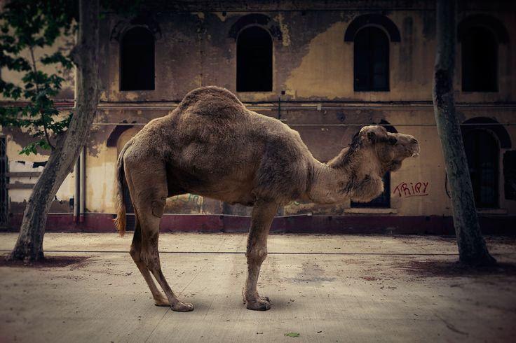The rough skin of the elephant © Pàtric Marín