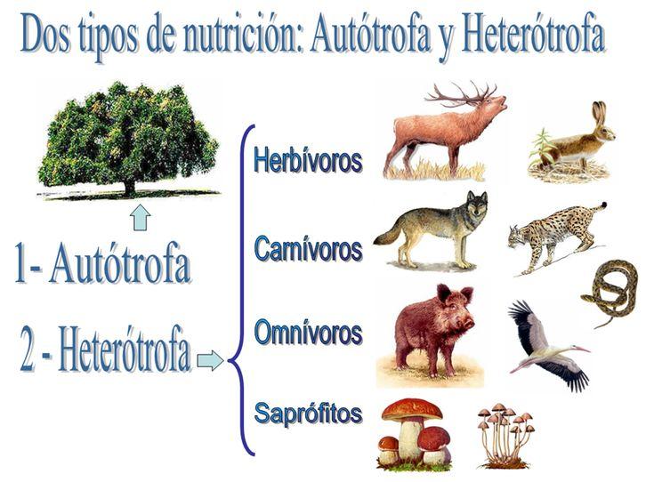 Resultado de imagen para cual es la diferencia entre un organismo autotrofo y uno heterotrofo