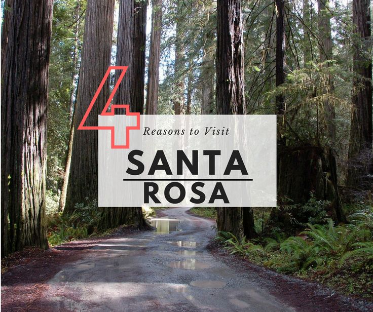 Santa Rosa is an amazing part of Northern California . I spent a week checking out everything Santa Rosa has to offer and highly recommend visiting.