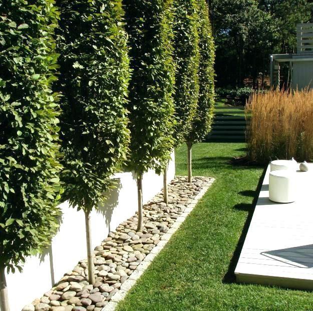b8c0cee324fec99e8d503663192bf29e - Tall Skinny Trees For Small Gardens