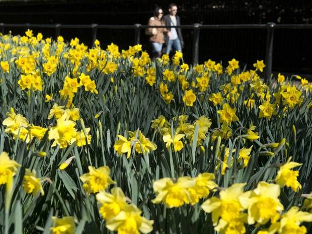 Spring Equinox: What are we actually celebrating today? - Gadgets & Tech - Life & Style - The Independent
