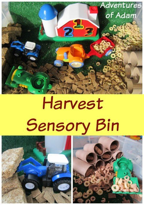 Day 30 - Cereal sensory bin Harvest Sensory Bin | http://adventuresofadam.co.uk/harvest-sensory-bin/
