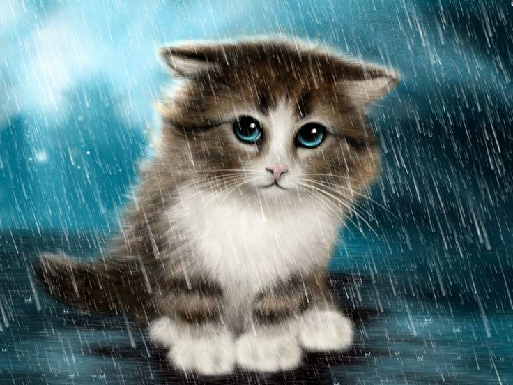 Cute Cat In Rain Wallpaper New Hd Wallpapers