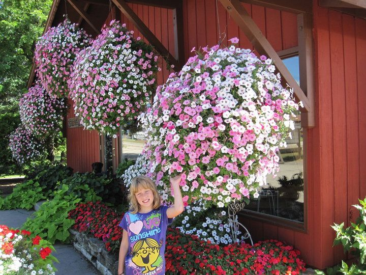 Do you want BIG flowers this year? Use our secret fertilizer! www.BeatYourNeighbor.com
