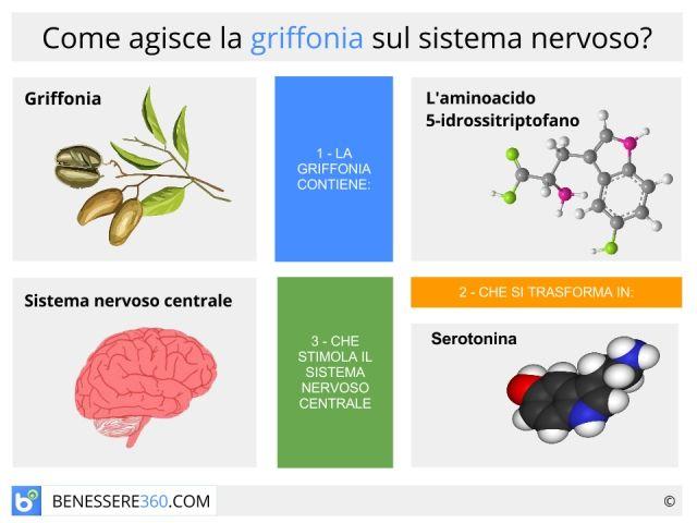 Griffonia simplicifolia: proprietà, controindicazioni, effetti collaterali e posologia