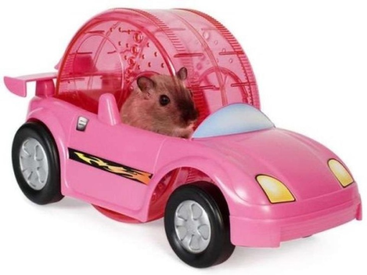 Hamster wheel car-- who ever thought of this is a genius! I now need a hamster.