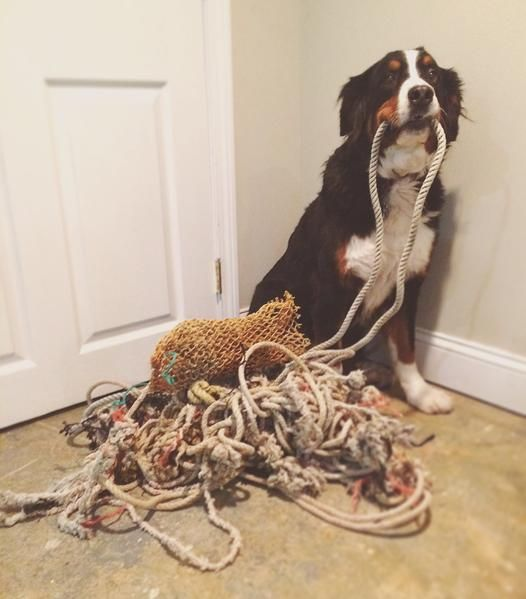 Wash Ashore Store :: Marine debris upcycled into rope dog leashes, collars and more. Follow us on Facebook, Instagram, Snapchat and Twitter @WashAshoreStore to follow our efforts!