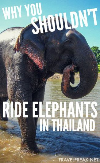 The current state of tourism in Southeast Asia is deplorable.  Riding elephants in Thailand is an activity you should never participate in or tolerate.  Here's why...and here's what you can do to help.