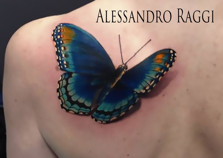 Butterfly, realistic by Alessandro Raggi