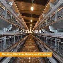 Tianrui Design Hot Dip Galvanized Automatic UAE Chicken Poultry Farm Equipment for Sale