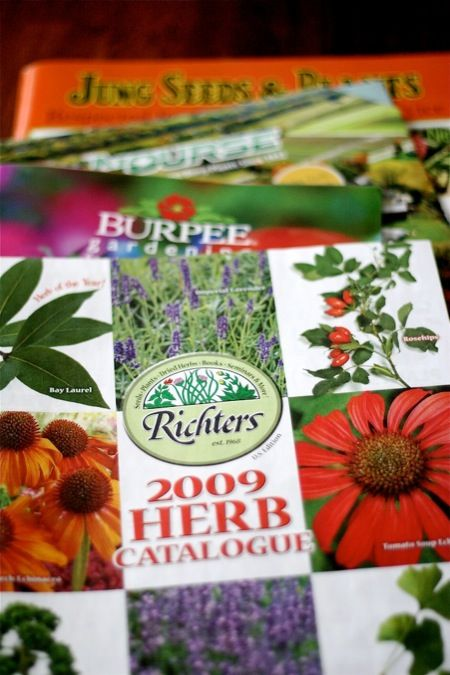 top 5 seed catalogs: Non Gmo Seeds, Seeds Packets, Catalog Despit, Buy Seeds, Seeds Company, Mailbox Holidays Catalog, Growing Things, Seeds Catalog, Gardens Growing