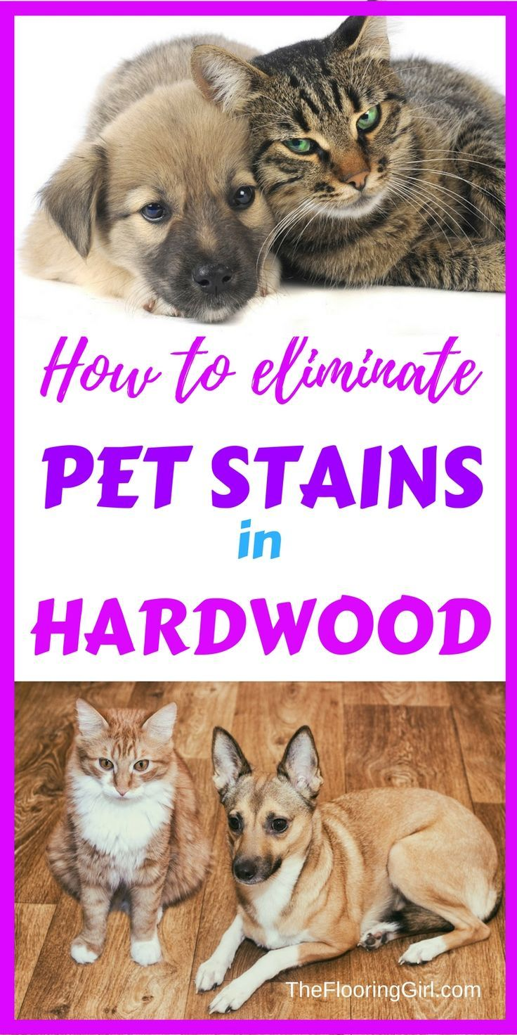 How Do You Get Rid Of Pet Stains In Hardwood Flooring